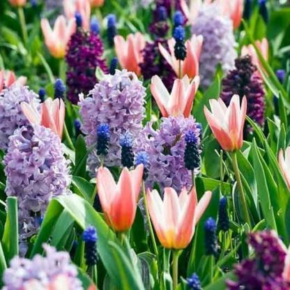 tavaszi vegyes viraghagyma_florapont