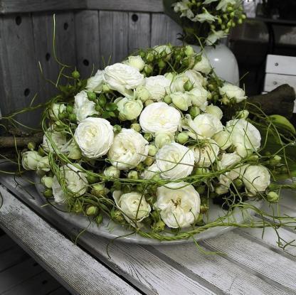 Rosa Artemis ® 3 Káprázatos, romantikus krémfehér színű nosztalgia bokorrózsa.