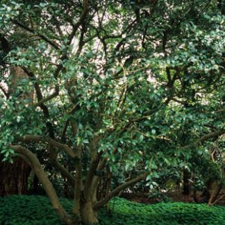 Lomblevelű fák, cserjék