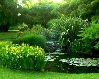 Mocsári, vízinövények