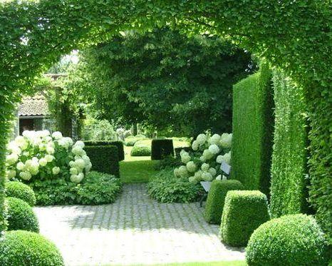 sövények a kertben