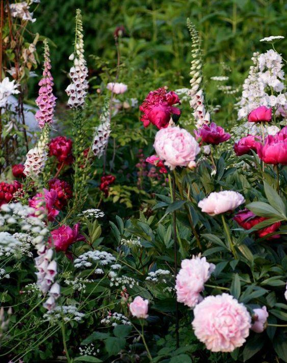 bazsarózsa társítása gyűszűvirággal