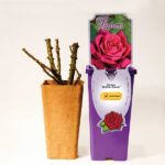 kordes plant-o-fix kiszerelés_florapont
