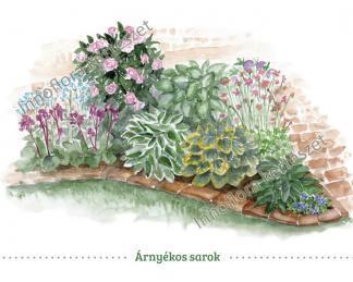 árnyékos kert virágai sarok összeállítás