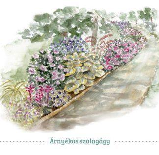 félárnyékos előkert virágai évelő szalagágy