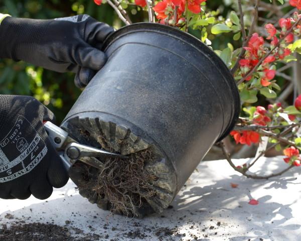 konténeres dísznövény ültetése