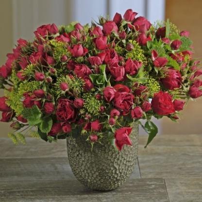 Manora piros ágyás rózsa