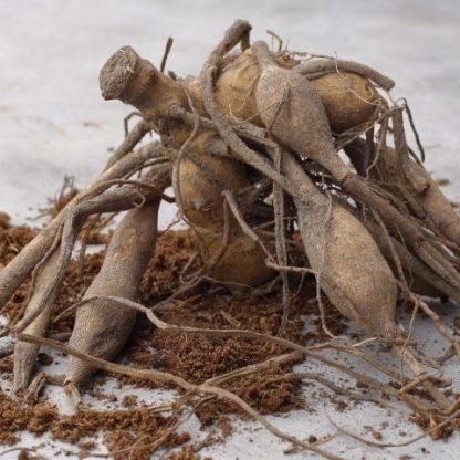 dáliagumó a Florapont kínálatában