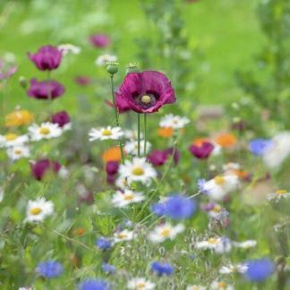 Egynyári és kétnyári virág-összeállítások