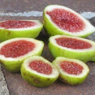 Ficus carica-paradiso1 - füge
