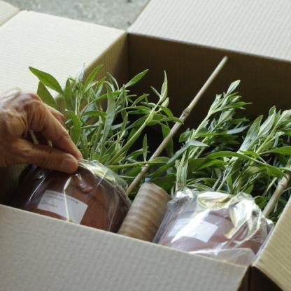14 cm konténeres évelő menyecskeszem a Florapont kínálatában