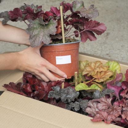 konténeres tűzeső rendelés florapont kínálatából